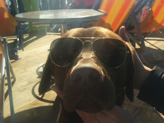 Mein Labrador