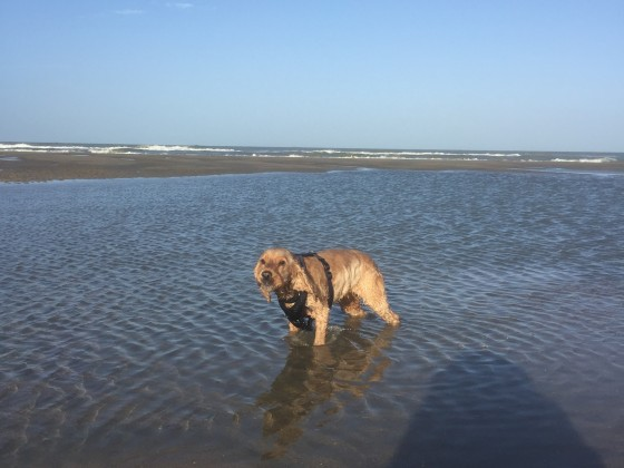 Mein Hund im Meer