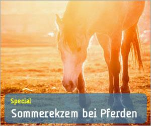Special - Sommerekzem bei Pferden