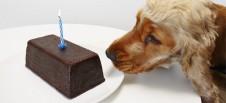 Schokolade und Hund