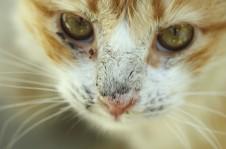 Katze mit Haarausfall