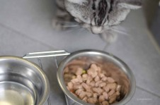 Katze vor Futternapf