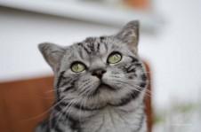 Kopfschiefhaltung Katze