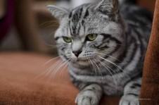 Eine Katze liegt auf einem Möbelstück