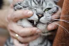 Zähne einer Katze