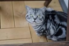 Katze sucht Schutz im Schatten.