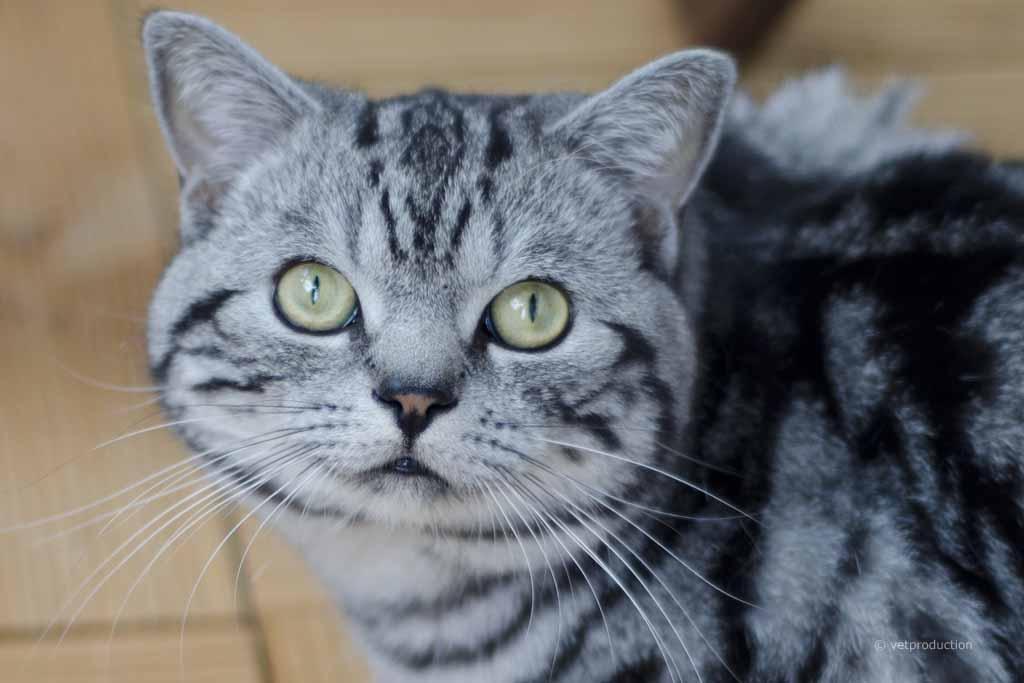 Inkontinenz Bei Der Katze Definition Ursachen Symptome
