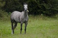 Ein Pferd auf der Wiese
