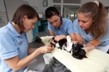 Katze bei der Blutentnahme