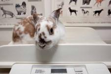 Gewichtskontrolle Kaninchen
