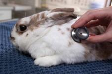 Untersuchung Kaninchen