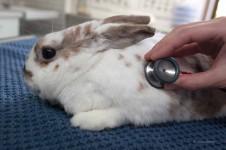 Kaninchen beim Tierarzt