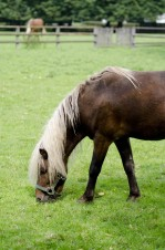 Pferd auf der Wiese