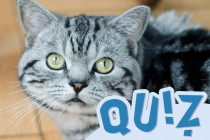 Tiermedizinportal - Teaser - Quiz - Katze