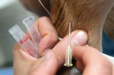 Blutentnahme beim Hund
