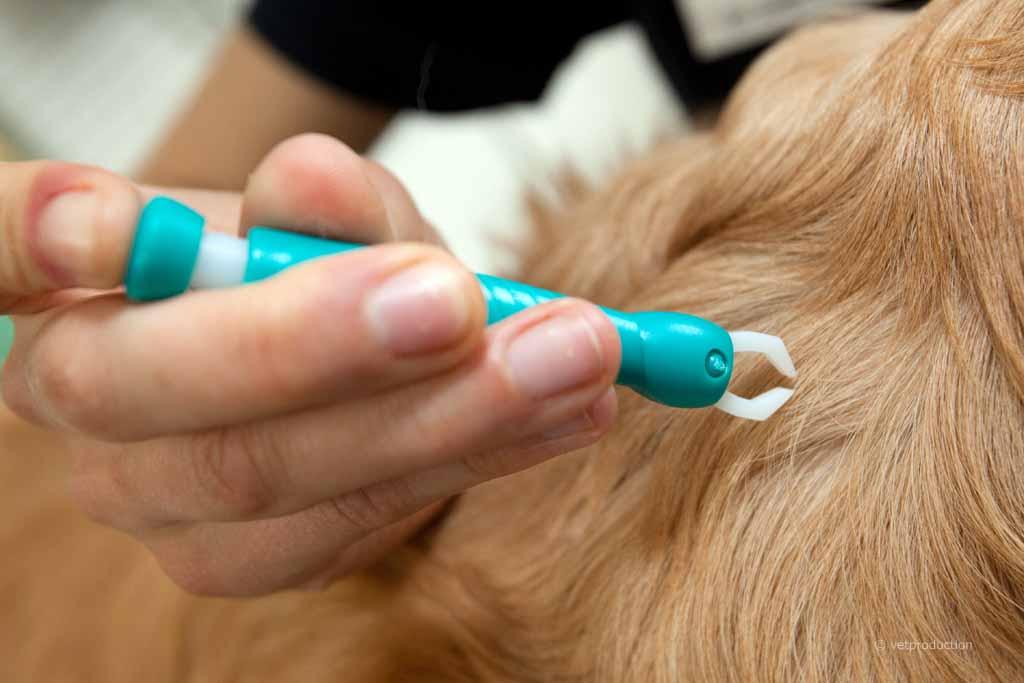 Hund mit Zeckenzange