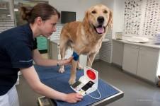 Blutdruck-Messung beim Hund