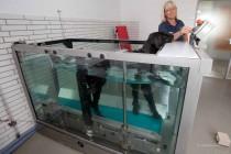 Hund beim Aqua-Training