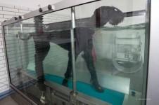 Hund Aquatraining bei Arthrose