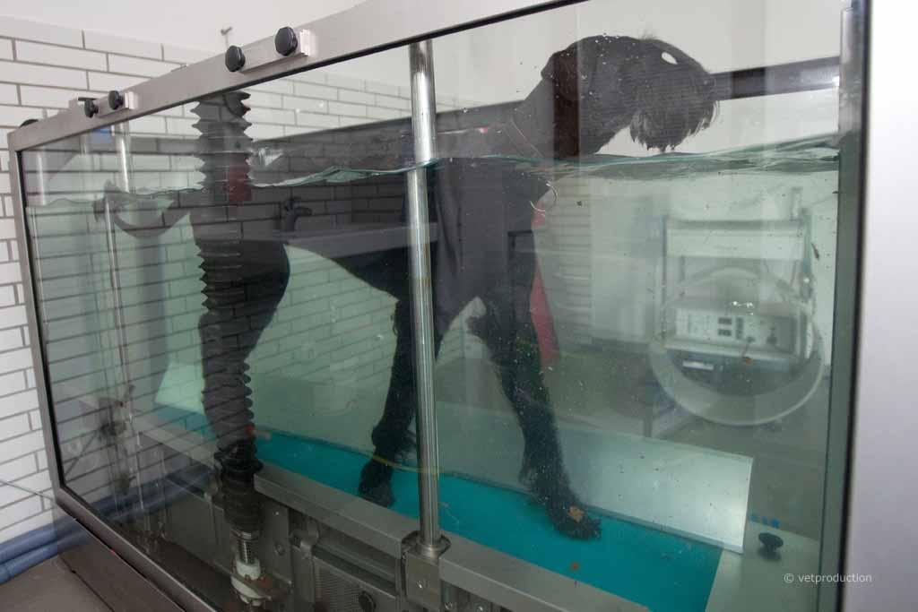Hund Aquatraining