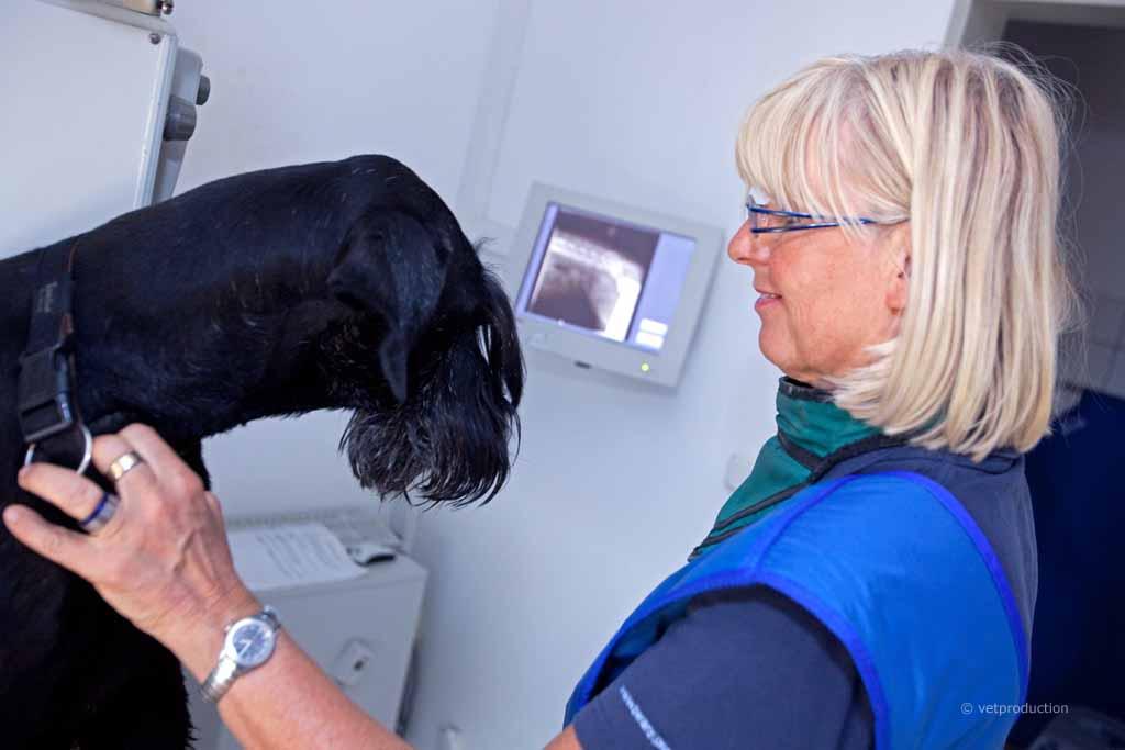 Röntgen Untersuchung Bei Tieren Definition Durchführung