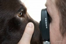 Augenuntersuchung Hund
