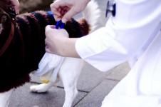 Beim Hund wird Spontanharn entnommen