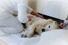 Hund Massage