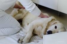 Untersuchung eines Hundes