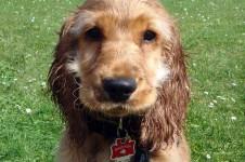 Ein Hund mit Steuermarke