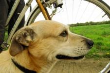 Radfahren mit dem Hund