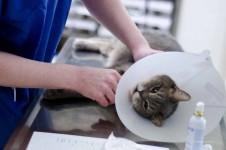 Katze mit Halskragen beim Tierarzt
