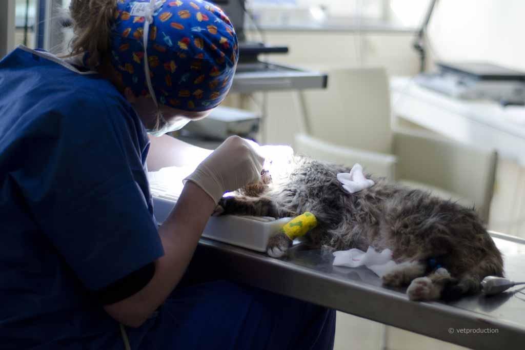 zahnstein bei katzen selbst entfernen