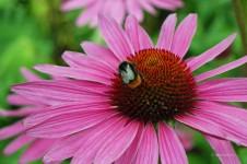 Insekt auf Blume