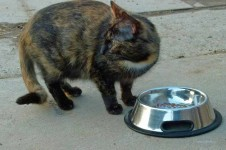 Katze am Fressnapf