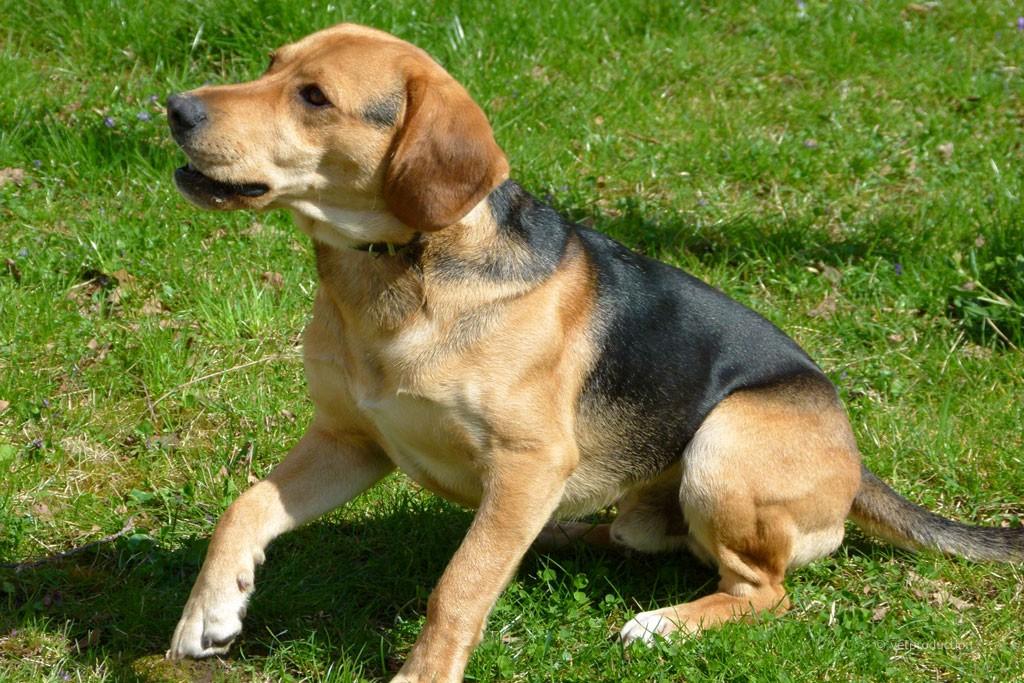 Dating seite fur hundebesitzer