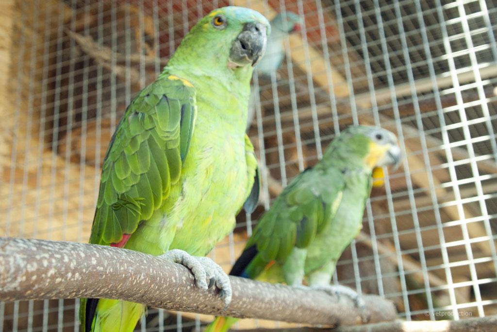 Aspergillose Beim Vogel Definition Ursachen Symptome