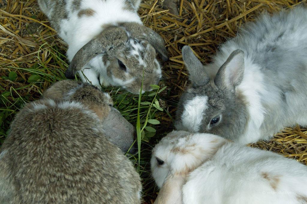 Haarlinge beim kaninchen diagnose behandlung prognose for Z portal