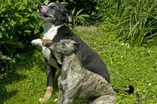 Zwei Hunde Betteln