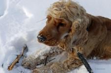 Ein Hund liegt im Schnee