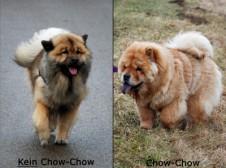 Eurasier und Chow Chow