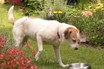 Hund mit Napf