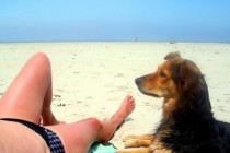 Urlaub mit Hund, © Klaus Steves / pixelio