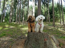 Hunde im Wald