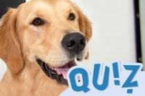 Tiermedizinportal-Teaser-Quiz-Hund