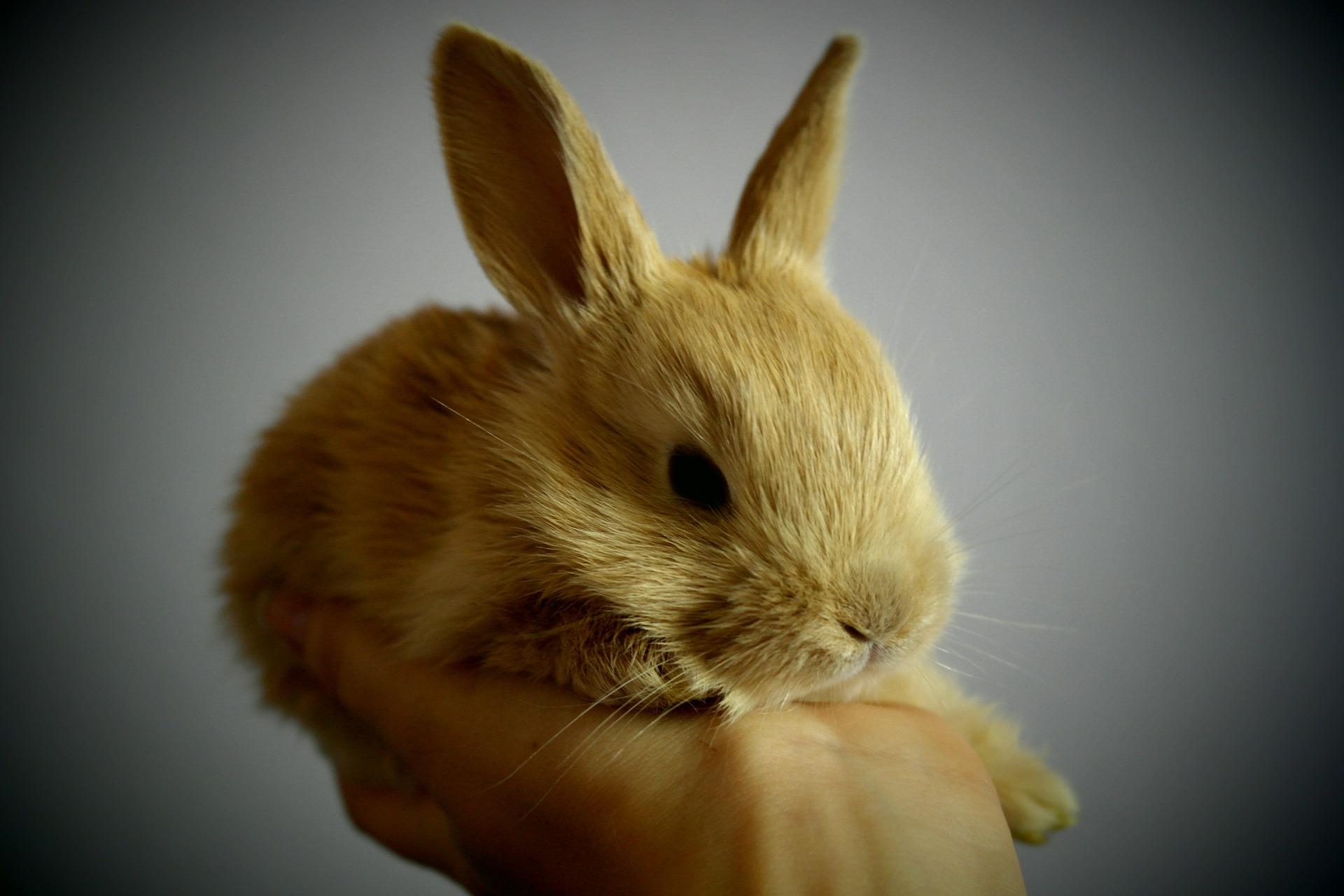 kokzidiose beim kaninchen definition ursachen symptome tiermedizinportal. Black Bedroom Furniture Sets. Home Design Ideas