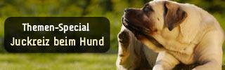 Themen-Special:Juckreiz beim Hund