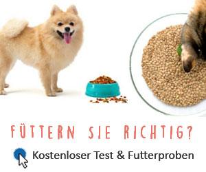 borreliose erkrankung symptome hund