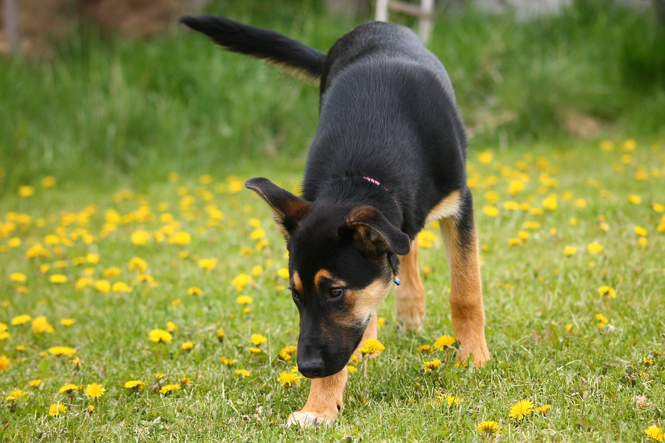 hund entwurmen wie oft