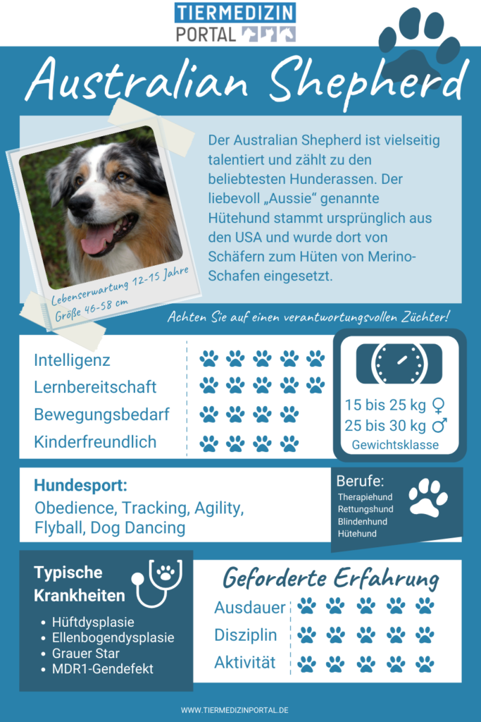 Alle wichtigen Infos zum Australian Shepherd